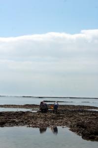 kagylószedés