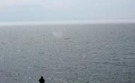 bálna is